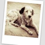 15493947-bezdomny-i-glodny-pies-porzucony-na-ulicy