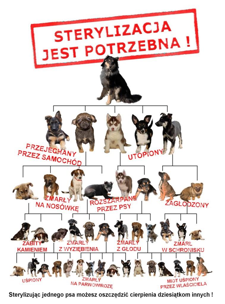 ulotka_sterylizacja_1