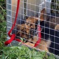 28.08.2016 - pomoc szczeniakom spod ubojni